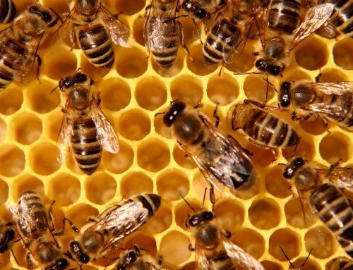 La favola delle api: un poemetto satirico dell'olandese Bernard de Mandeville
