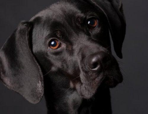 Le regole per possedere un cane: obblighi e responsabilità