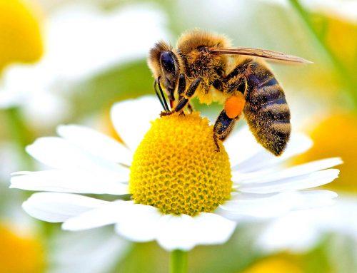 Le api riconoscono le quantità e lo zero (Testi del 2017 – 2018)
