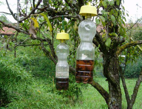 Come debellare (definitivamente) i nidi di vespe/calabroni!